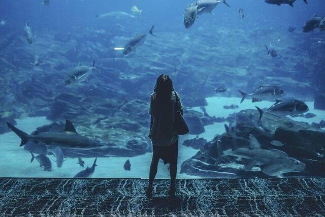 Child looking at fish in Aquarium in Dorset