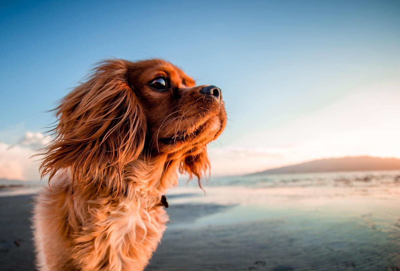 Wondrous Dog Friendly Beaches In Dorset Our Top Picks Dream Cottages Download Free Architecture Designs Embacsunscenecom