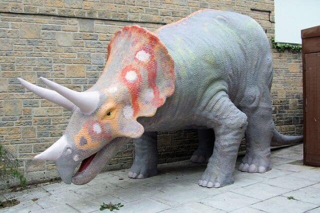 Dinosoar Museum Dorset